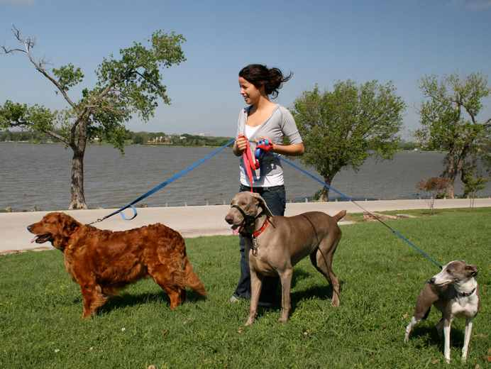 Where to find dog walking jobs